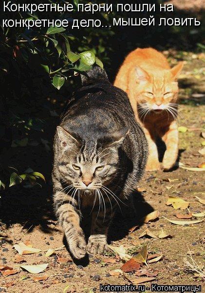 Котоматрица - Конкретные парни пошли на конкретное дело... мышей ловить