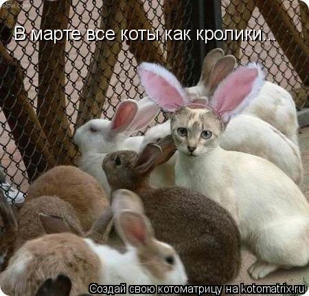 Котоматрица: В марте все коты как кролики...