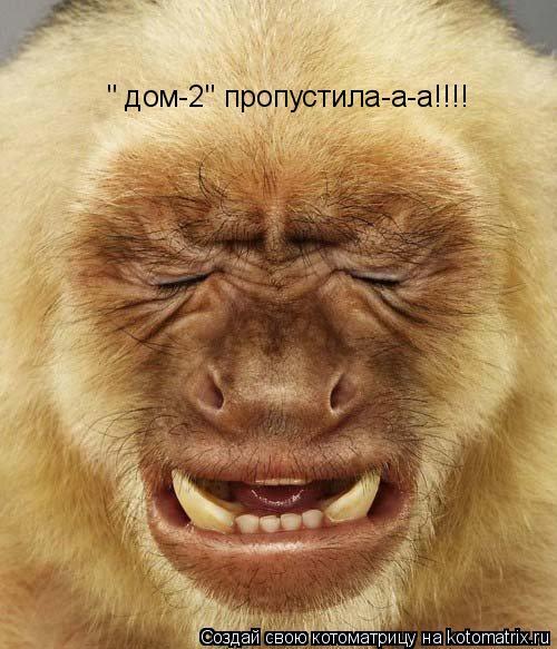 """Котоматрица: """" дом-2"""" пропустила-а-а!!!!"""