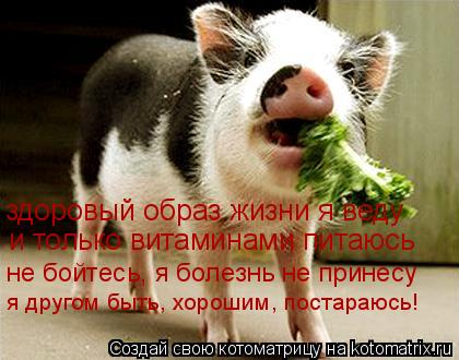 Котоматрица: здоровый образ жизни я веду и только витаминами питаюсь не бойтесь, я болезнь не принесу я другом быть, хорошим, постараюсь!