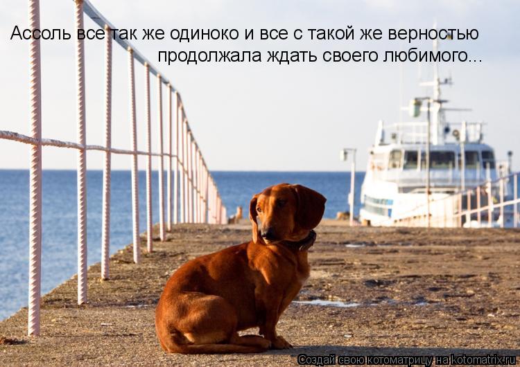 Котоматрица: Ассоль все так же одиноко и все с такой же верностью продолжала ждать своего любимого...