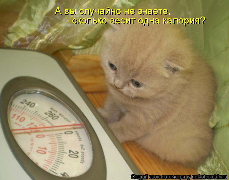 Котоматрица: А вы случайно не знаете, сколько весит одна калория?