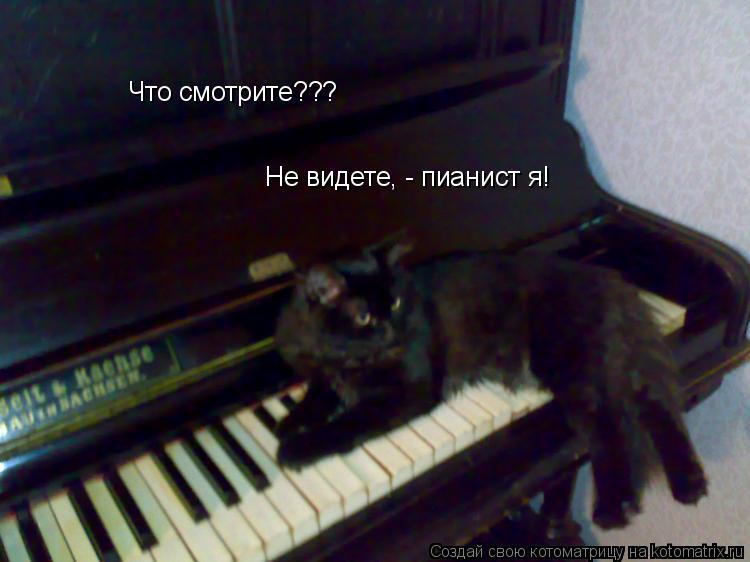 Котоматрица: Что смотрите??? Не видете, - пианист я!