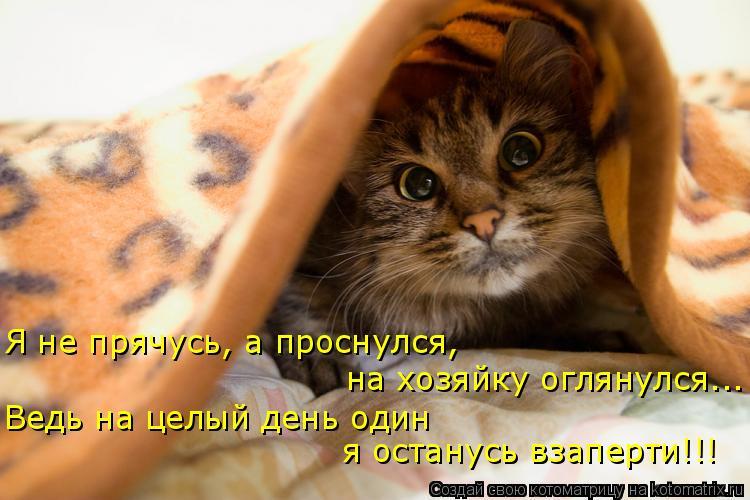 Котоматрица: Я не прячусь, а проснулся,  на хозяйку оглянулся... Ведь на целый день один  я останусь взаперти!!!