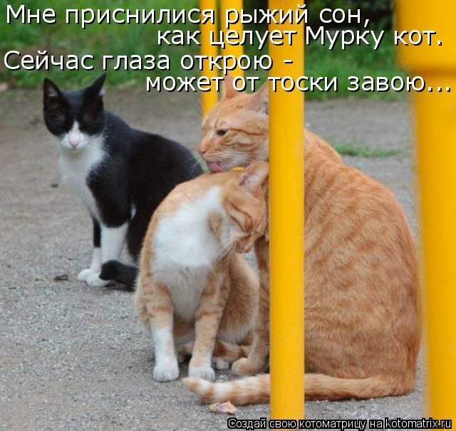 Котоматрица: Мне приснилися рыжий сон, как целует Мурку кот. Сейчас глаза открою - может от тоски завою...