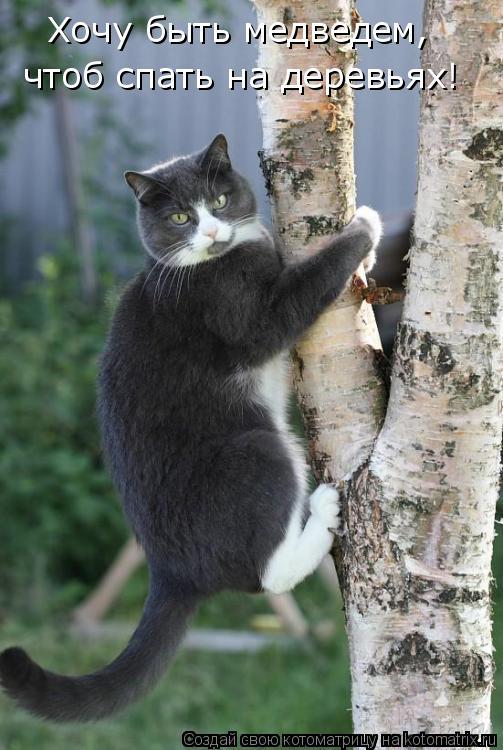 Котоматрица: Хочу быть медведем, чтоб спать на деревьях!
