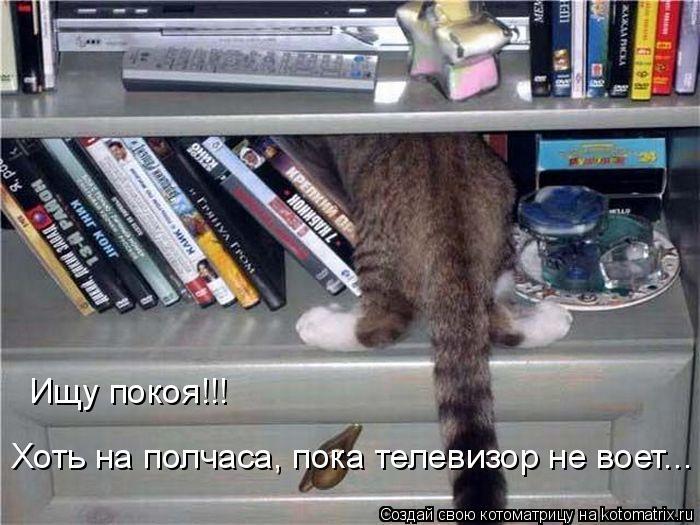 Котоматрица: Ищу покоя!!! Хоть на полчаса, пока телевизор не воет...
