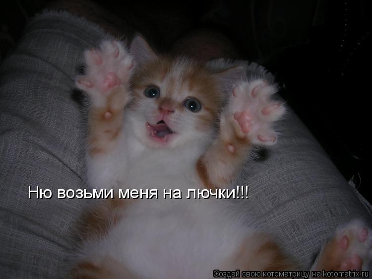 Котоматрица: Ню возьми меня на лючки!!!