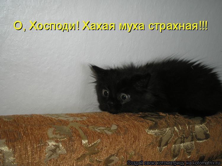 Котоматрица: О, Хосподи! Хахая муха страхная!!!