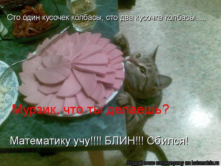 Котоматрица: Сто один кусочек колбасы, сто два кусочка колбасы..... Мурзик, что ты делаешь? Математику учу!!!! БЛИН!!! Сбился!