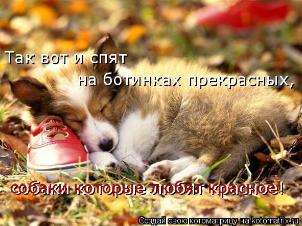 Котоматрица: Так вот и спят  на ботинках прекрасных, собаки которые любят красное! собаки которые любят красное!