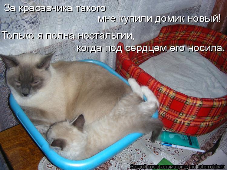 Котоматрица: За красавчика такого мне купили домик новый! Только я полна ностальгии, когда под сердцем его носила.
