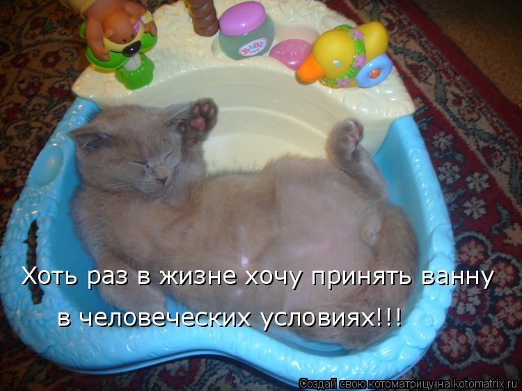 Котоматрица: Хоть раз в жизне хочу принять ванну  в человеческих условиях!!!
