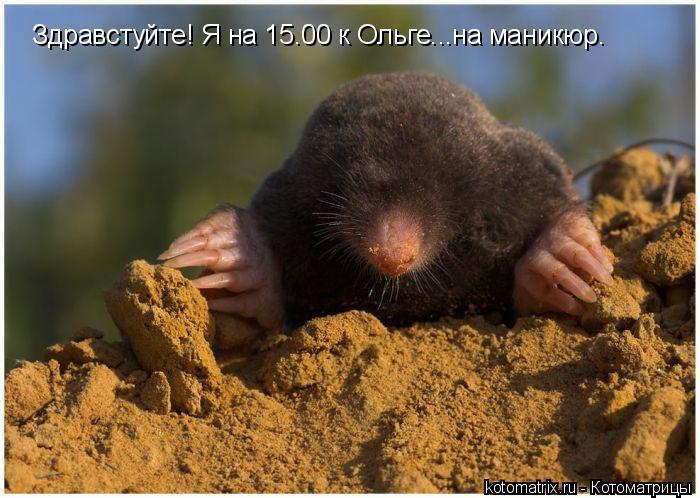 Котоматрица: Здравстуйте! Я на 15.00 к Ольге...на маникюр.