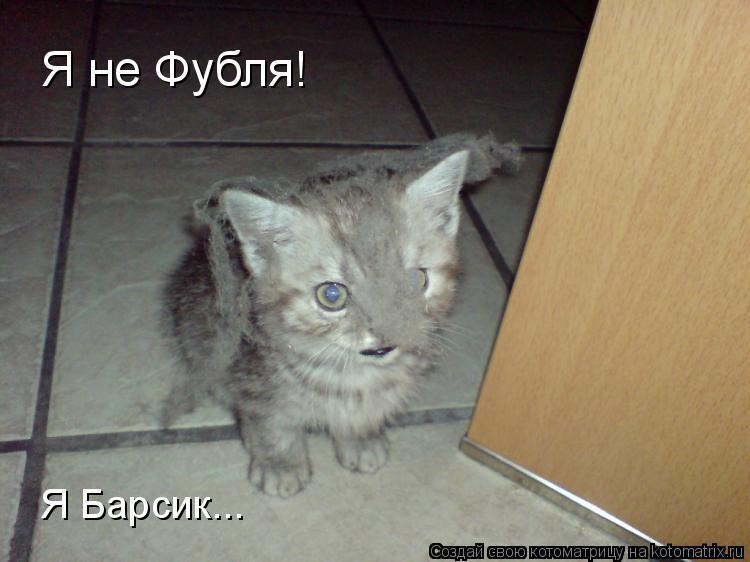 Котоматрица: Я не Фубля! Я Барсик...