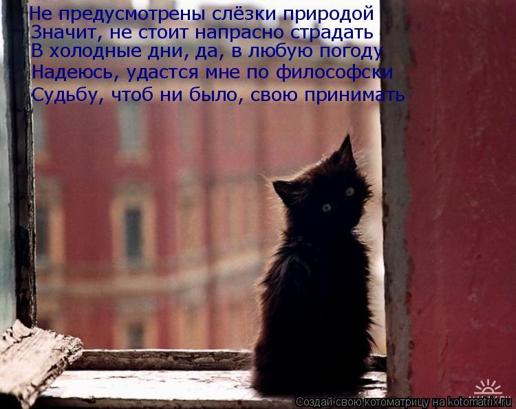 Котоматрица: Не предусмотрены слёзки природой Значит, не стоит напрасно страдать  В холодные дни, да, в любую погоду Надеюсь, удастся мне по философски С