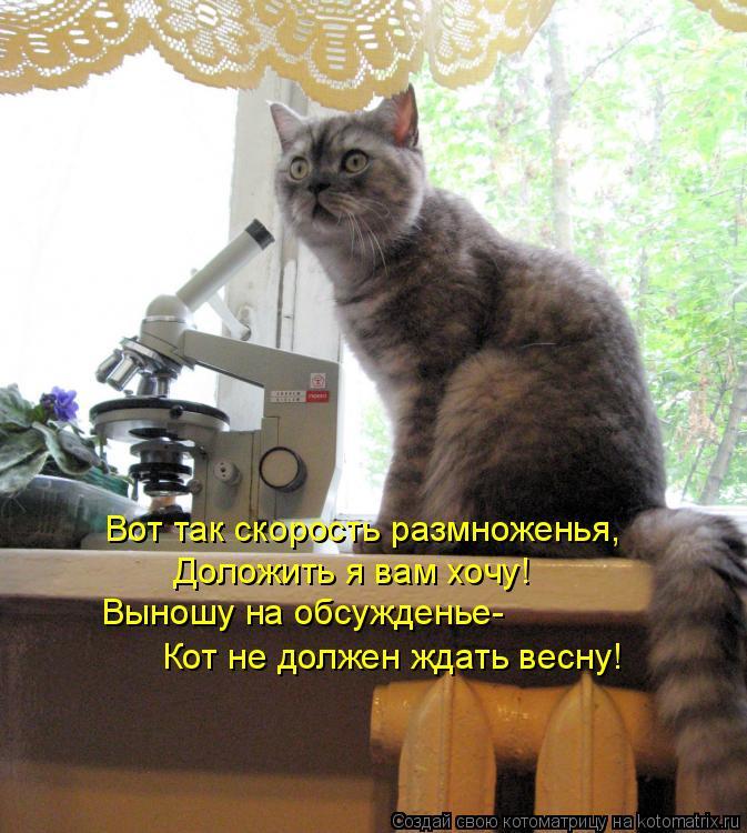 Котоматрица: Вот так скорость размноженья, Доложить я вам хочу! Выношу на обсужденье- Кот не должен ждать весну!