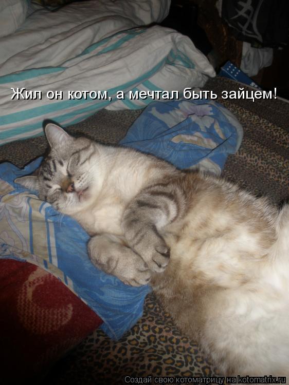 Котоматрица: Жил он котом, а мечтал быть зайцем!