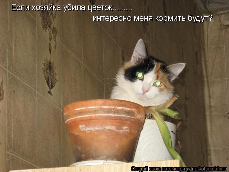 Котоматрица: Если хозяйка убила цветок......... интересно меня кормить будут?