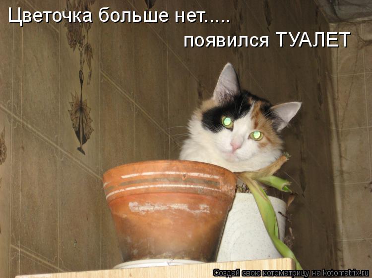 Котоматрица: Цветочка больше нет..... появился ТУАЛЕТ