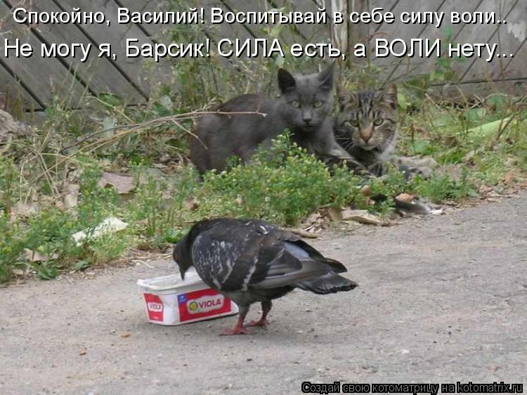 Котоматрица: Спокойно, Василий! Воспитывай в себе силу воли.. Не могу я, Барсик! СИЛА есть, а ВОЛИ нету...