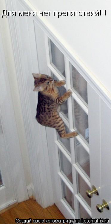 Котоматрица: Для меня нет препятствий!!!