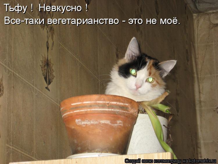 Котоматрица: Тьфу !  Невкусно ! Все-таки вегетарианство - это не моё.