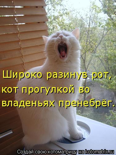 Котоматрица: Широко разинув рот, кот прогулкой во владеньях пренебрёг.