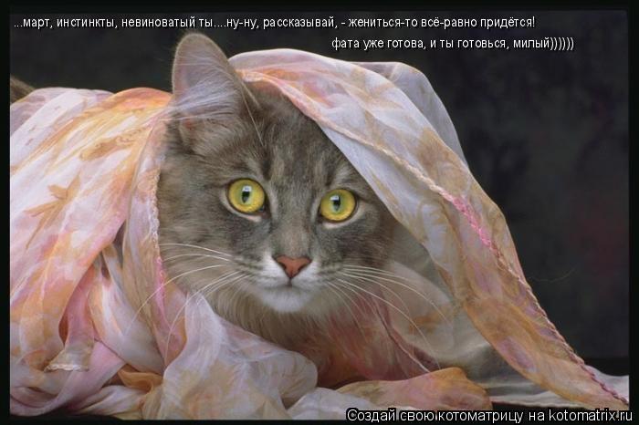 Котоматрица: ...март, инстинкты, невиноватый ты....ну-ну, рассказывай, - жениться-то всё-равно придётся!  фата уже готова, и ты готовься, милый))))))