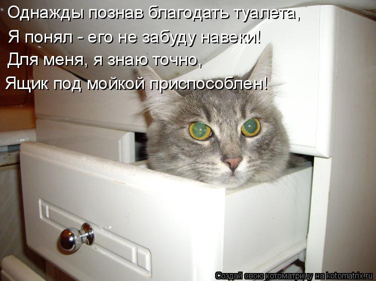 Котоматрица: Однажды познав благодать туалета, Я понял - его не забуду навеки! Для меня, я знаю точно, Ящик под мойкой приспособлен!