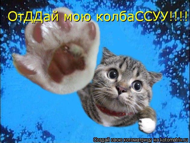 Котоматрица: ОтДДай мою колбаССУУ!!!!