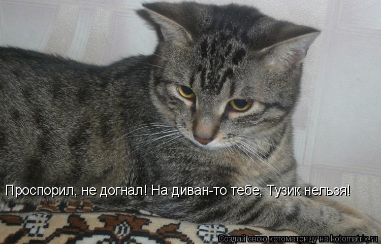 Котоматрица: Проспорил, не догнал! На диван-то тебе, Тузик нельзя!