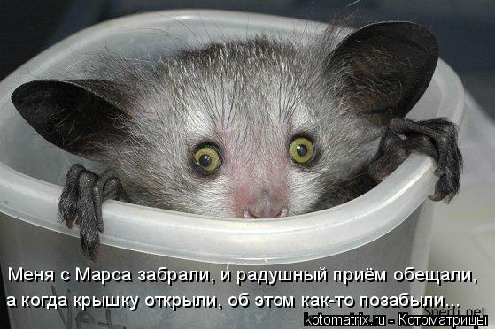 Котоматрица: Меня с Марса забрали, и радушный приём обещали, а когда крышку открыли, об этом как-то позабыли...