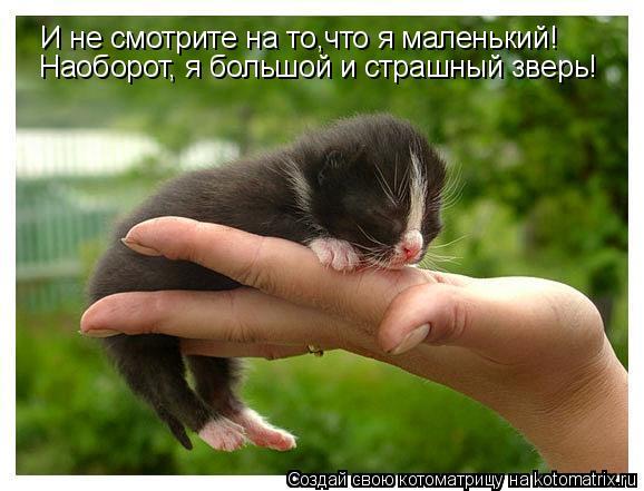 Котоматрица: И не смотрите на то,что я маленький! Наоборот, я большой и страшный зверь!