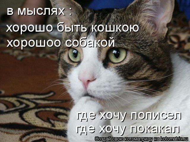 Котоматрица: в мыслях : хорошо быть кошкою хорошоо собакой где хочу пописел где хочу покакал