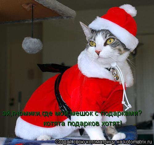 Котоматрица: эй,гномики,где мой мешок с подарками? котята подарков хотят!