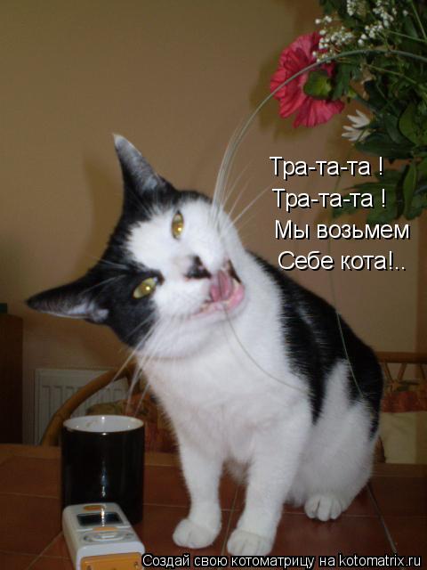 Котоматрица: Тра-та-та ! Тра-та-та ! Мы возьмем Себе кота!..