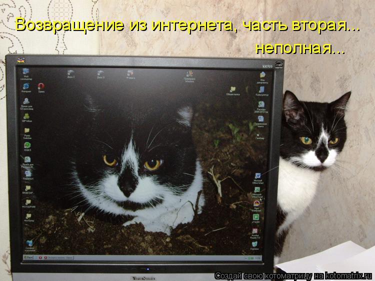 Котоматрица: Возвращение из интернета, часть вторая... неполная...