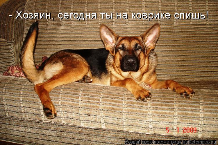 Котоматрица: - Хозяин, сегодня ты на коврике спишь!