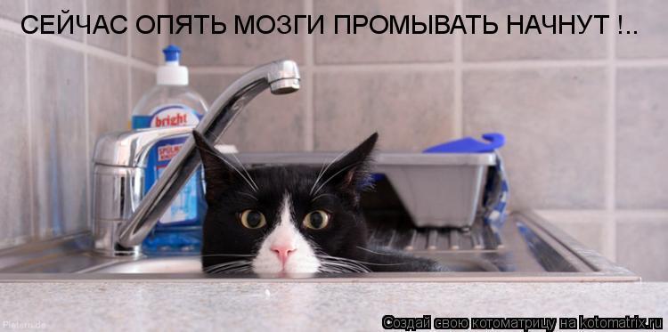Котоматрица: СЕЙЧАС ОПЯТЬ МОЗГИ ПРОМЫВАТЬ НАЧНУТ !..
