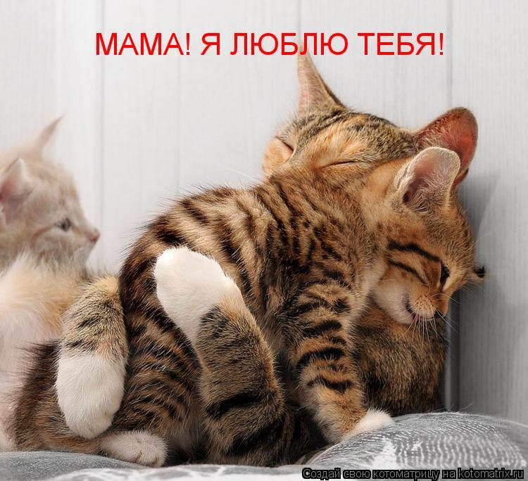Котоматрица: МАМА! Я ЛЮБЛЮ ТЕБЯ! МАМА! Я ЛЮБЛЮ ТЕБЯ!