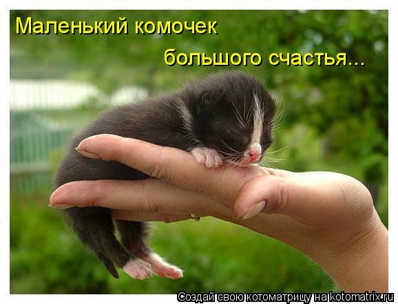 Котоматрица: Маленький комочек большого счастья...