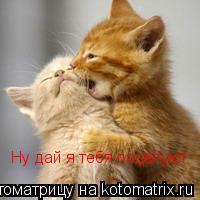 Котоматрица: Ну дай я тебя поцелую!