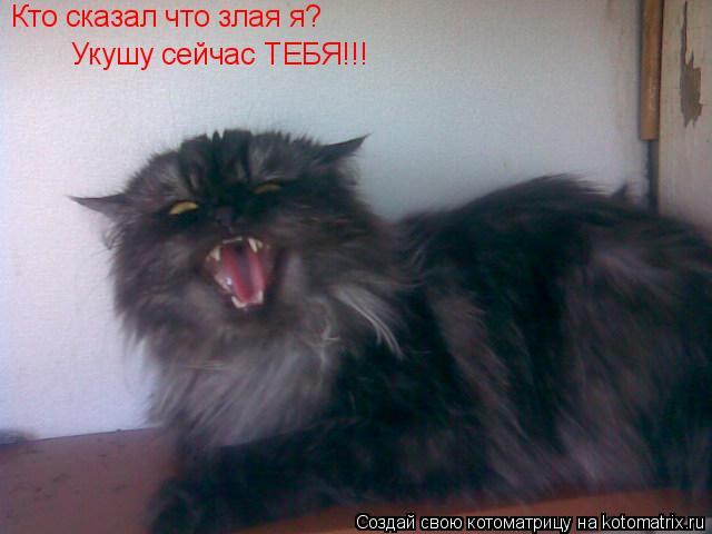 Котоматрица: Кто сказал что злая я? Кто сказал что злая я? Укушу сейчас ТЕБЯ!!!
