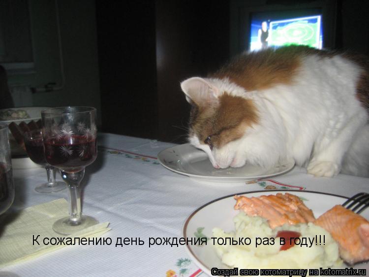 Котоматрица: К сожалению день рождения только раз в году!!!