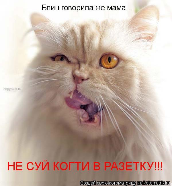 Котоматрица: Блин говорила же мама... НЕ СУЙ КОГТИ В РАЗЕТКУ!!!