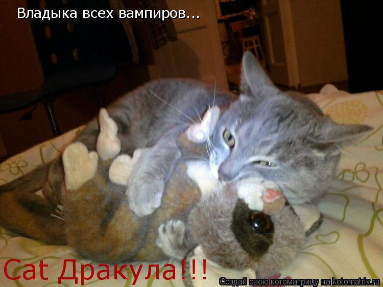 Котоматрица: Владыка всех вампиров... Cat Дракула!!!