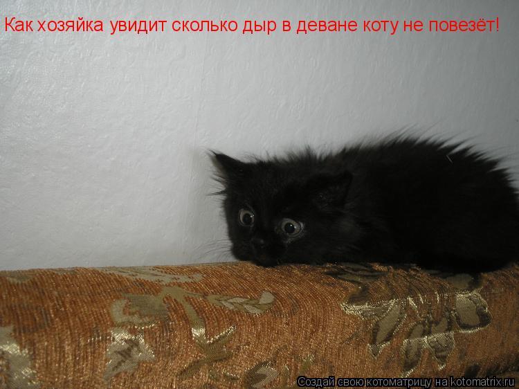 Котоматрица: Как хозяйка увидит сколько дыр в деване коту не повезёт!