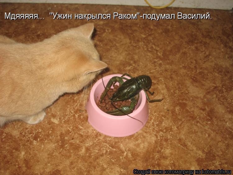 """Котоматрица: Мдяяяяя...  """"Ужин накрылся Раком""""-подумал Василий."""