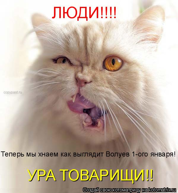 Котоматрица: ЛЮДИ!!!! Теперь мы хнаем как выглядит Волуев 1-ого января! УРА ТОВАРИЩИ!!